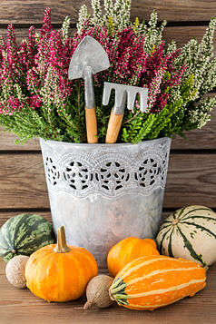 Fall_decoration_for_Chico_rental_properties