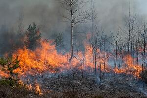 forest fire with smoke