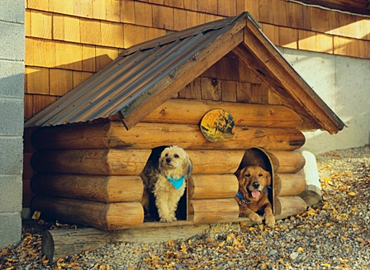 dogs in doghouse