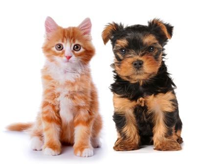 small cat and dog